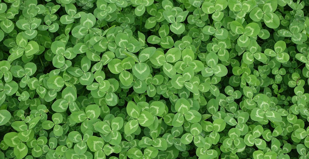 Saint Patrick's Day email design inspiration